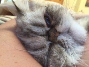 Lilly cuddle